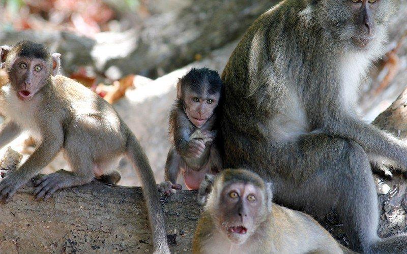 Una banda de monos asalta una comisaría y se lleva documentos importantes